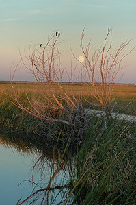 San Bernard Moon 1204