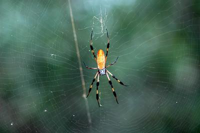 Spider - Brazos Bend 0908