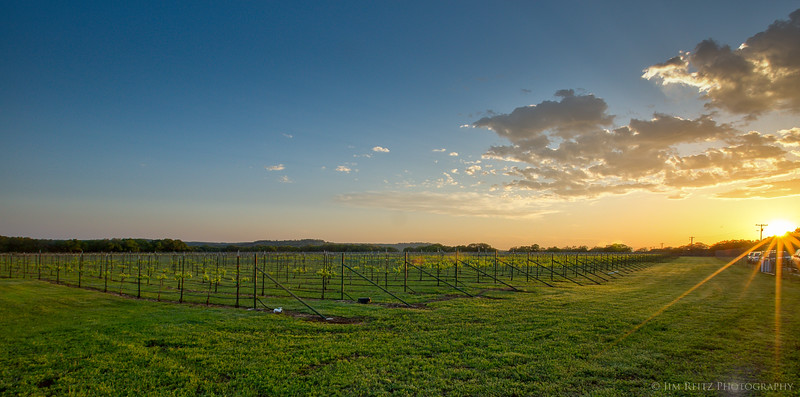 Trattoria Lisina's adjacent winery & vineyards, at sunset.