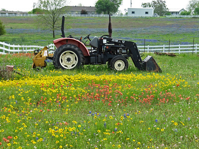 Texas Wildflower - Washington County