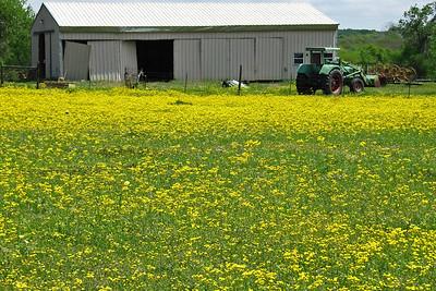 Texas Wildflower - Washington County, TX