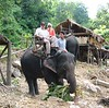 We met Mirimba the elephant who took us on a nice trek through the jungle and even across a river before bringing us safely back to our starting point.