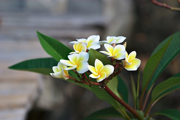 Flower at Panviman