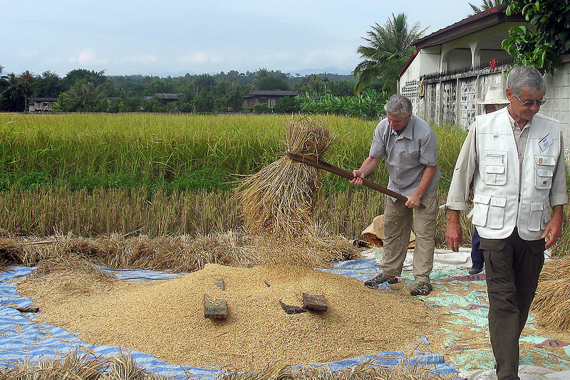 On one of our bus trips the driver stopped along the road to give us a chance to see a farmer thrashing his rice by hand.  A couple of us walked down and got a chance to give it a try.
