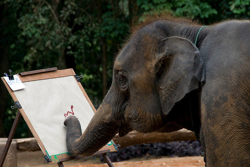 I would not have believed this had I not seen it for myself but these elephants have been trained to do simple paintings.