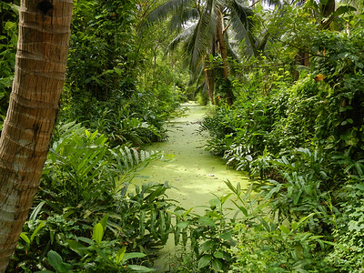 Green oasis?