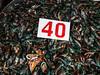 Perna viridis, asian green mussle.