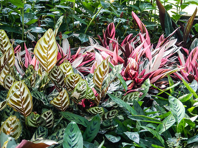 Colorful prayer plants and aglaonemas.