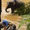 Bathing Elephants In The River, Chiang Mai, Thailand