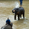 Elephant Shower, Maetaman Elephant Camp, Chiang Mai, Thailand
