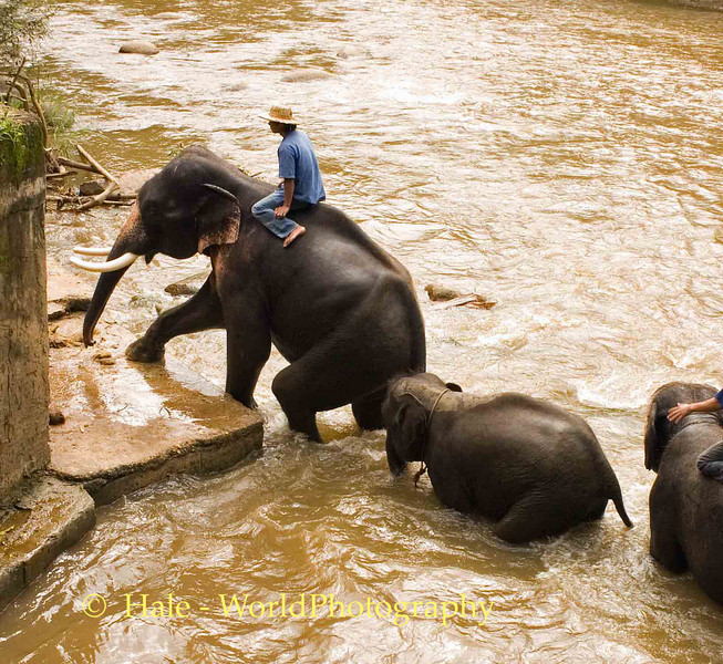 End of Elephant Baths, Maetaman Elephant Camp, Chiang Mai, Thailand
