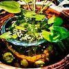 Water garden in a flower pot