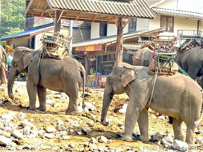 Karen Tribe Elephant Village
