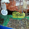 Squid for sale