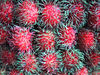 Yep, Rambutan is red with greenish spikey fronds.  And sometimes it's yellow.