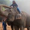 "Elephant ""Mahout"" training in the Golden Triangle Thailand."