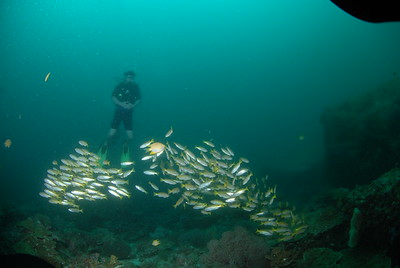 © Joseph Dougherty. All rights reserved.  Scuba diving at Koh Tachai Island.