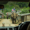 Elephant-Riding-Chiang Rai-Thailand