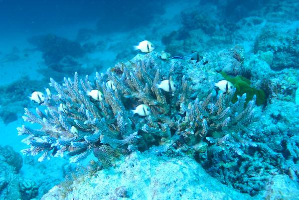 Similan Islands 2008, Main Islands Dive Sites