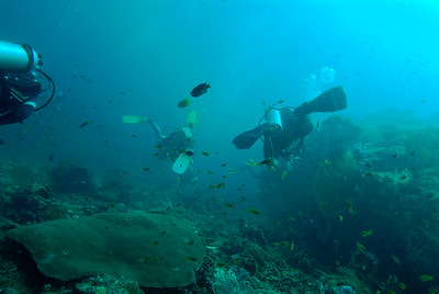 © Joseph Dougherty. All rights reserved.  Similan Islands, Andaman Sea, west coast of Thailand