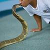 Snake charmer Phuket