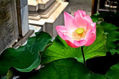Lily - Wat Phra Kaew, Bangkok