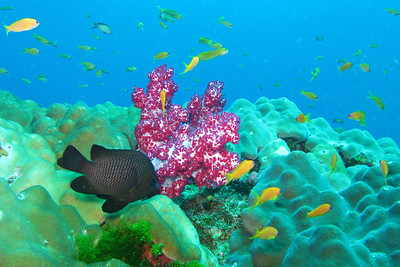 Christmas dive trip in the andaman sea - Similan islands