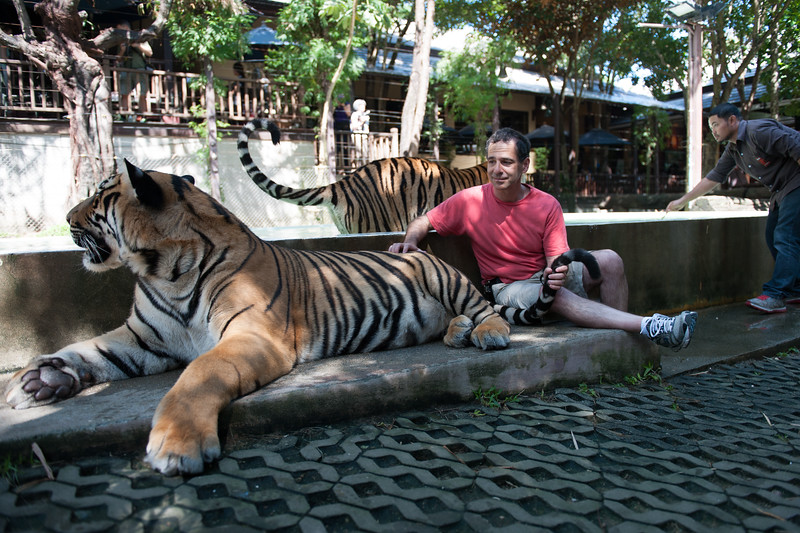 The tigers are HUGE! We were told to stay to the back - away from head and front paws.