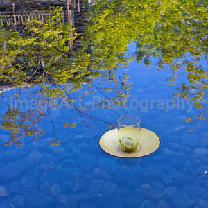 Flower in a gold leaf dish in a reflecting pond