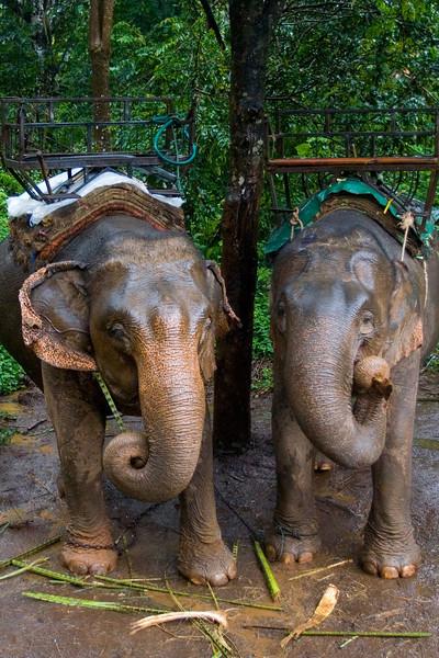 Thailand_NGingold_28