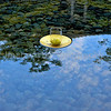 Floating offering in a pool of water