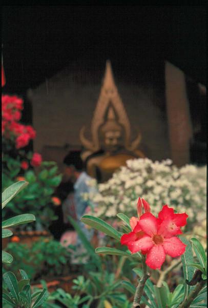 thai236