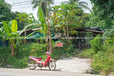 Banana palms and parked motorscooter outside Asian rural laundry