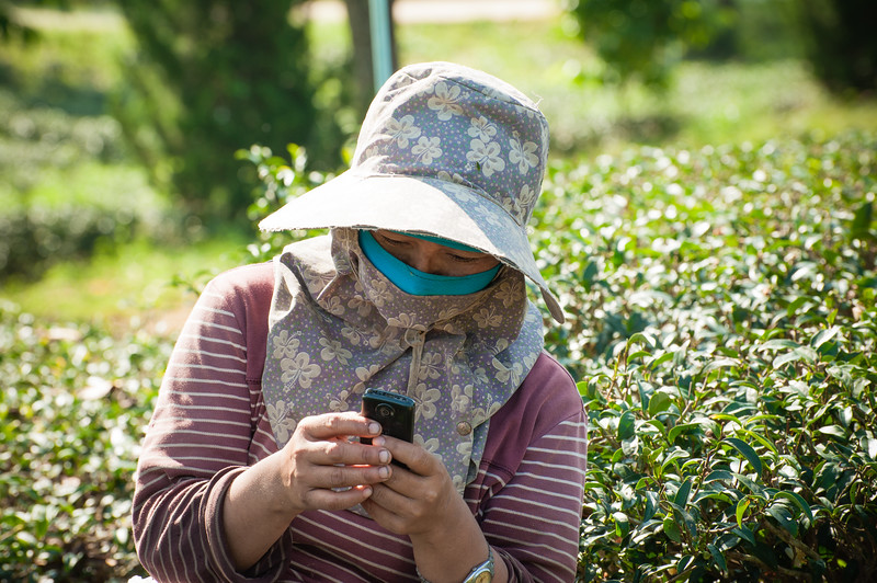 Tea Plantation - cell service was good even though it seemed the be middle of nowhere