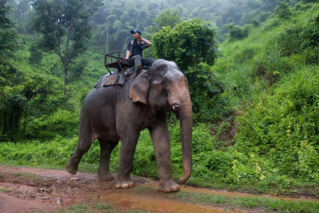 Thailand_NGingold_31
