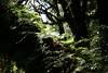 Ferns on Log Doi Inthanon
