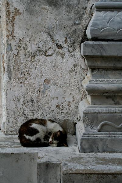 Bangkok temple cat.