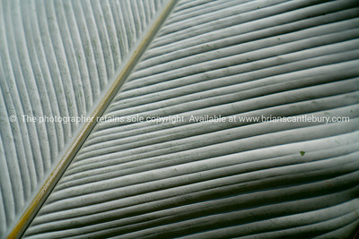 Soft focus bright green close-up large palm fan shaped frond
