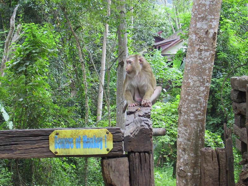 Beware of monkey