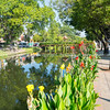 Chiang Mai city canal and bridge