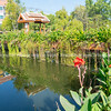 Tranquility of Chiang Mai old city canal reflecting planted edges and surrounding buildings.