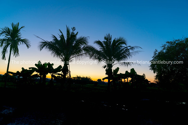 Coconut and banana palm trees silhouette against sunrise sky