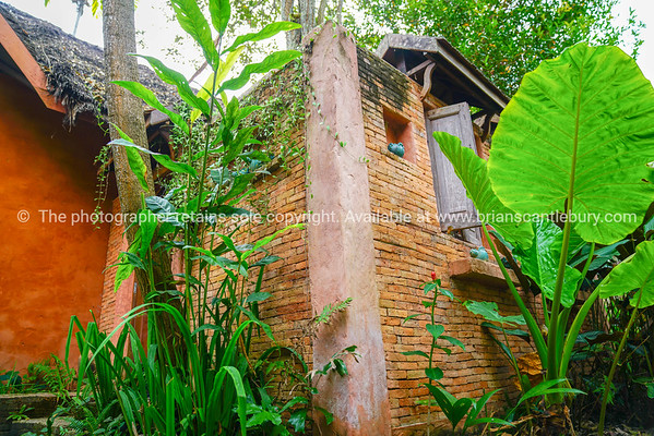 Large green taro leaves in garden with brick and render wall of tropical Thai house.