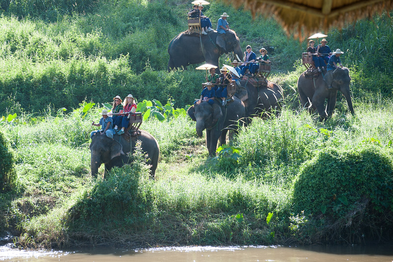 In two groups, we went on elephant tours across the river and through the brush.
