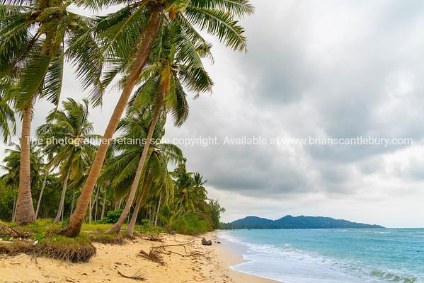 Coconut palm tree lined tropical shoreline