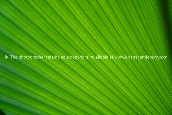 Close-up large palm fan shaped frond