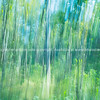 Forest abstract motion blur