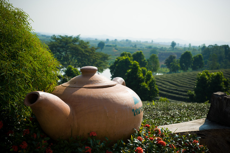 Oolong Tea Plantation