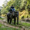 Steve On an Elephant