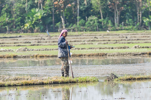 Worker in paddy fields s of Thailand.